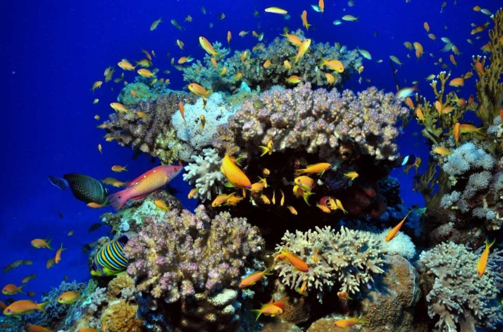 Pantai Lovina, Lovina Bali, Pantai, Bali, Pantai Lovina Bali, Snorkeling